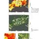 人工衛星「しきさい」が捉えた日本の猛暑