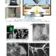 細胞と組織を水環境のままで観察できる電子顕微鏡ASEM