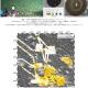 マンガンノジュール密集域を音で探す:新たな資源探査手法