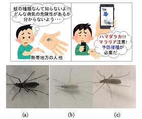 図2 蚊の種識別の必要性と三種類の蚊